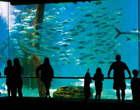 families gathered at the giant fish tank at the Audubon Aquarium of the Americas in New Orleans