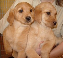Baby Maggie and Millie (formerly known as The Yellow Girls)