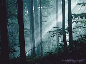 Forest at twilight