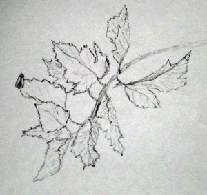 """Bug on a Leaf"" 26 September 2011"