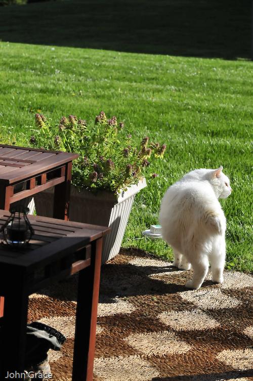 Casper in the sun