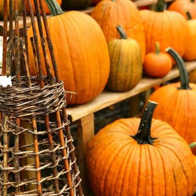 Pumpkins & Gourds, Garlic, Flower Bulbs & More