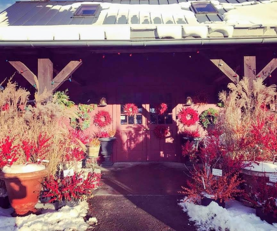 Shop outside with Winterberry