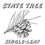 Day Coloring Book: State Tree(s), Piñon Pine and Ponderosa