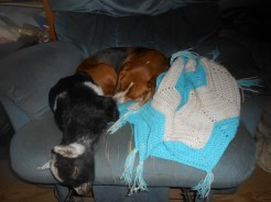 Penny & Pumba ... not sure how Pumba doesn't get a kink in his neck!