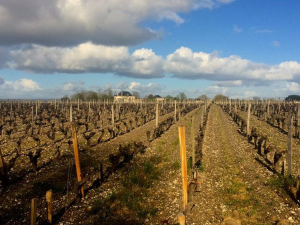 A view of Palmer from Rauzan Segla: two gorgeous Margaux in 2015