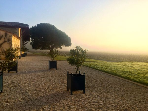 Morning mist Domaine de Chevalier