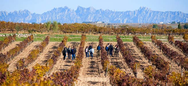 jean leon vineyards