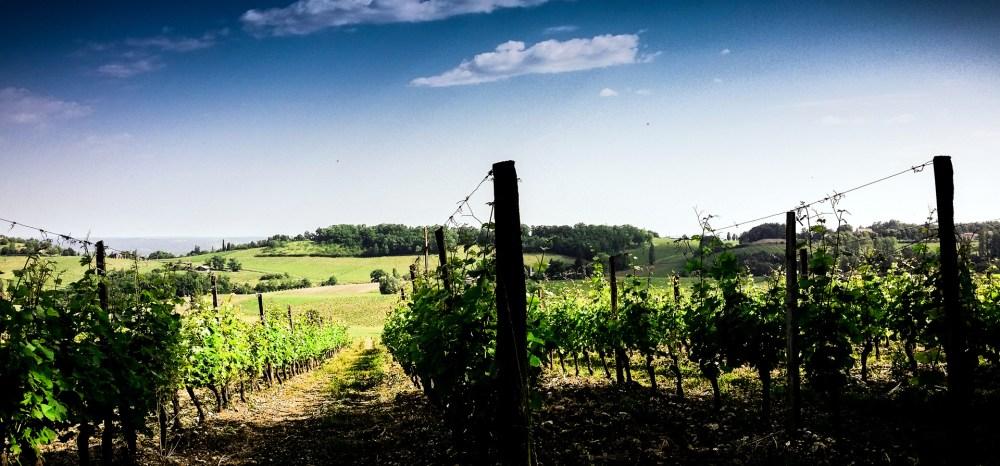 montravel wines bergerac