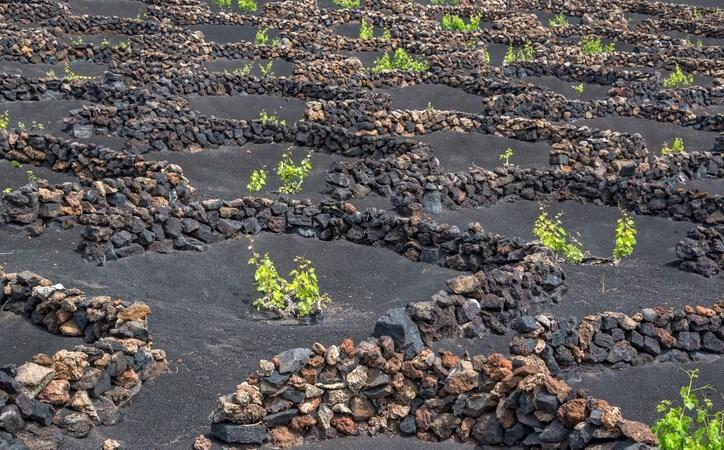 Най-добрите 5 лозарски почви в света