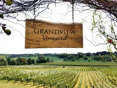 Grandview Vineyard in Mount Joy, Pennsylvania..  Wine Casual.