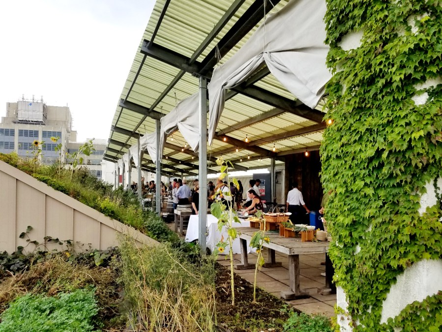 New Zealand Wine Tasting at Brooklyn Grange Rooftop Farm in New York, Wine Casual