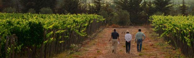 Carmenere vineyard at TerraNoble winery in Chile.