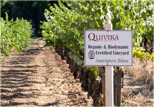 Biodynamic vineyards at Quivira
