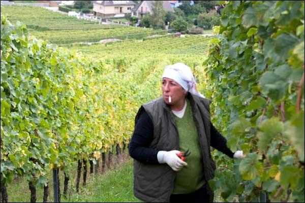 alsatian-wine-route
