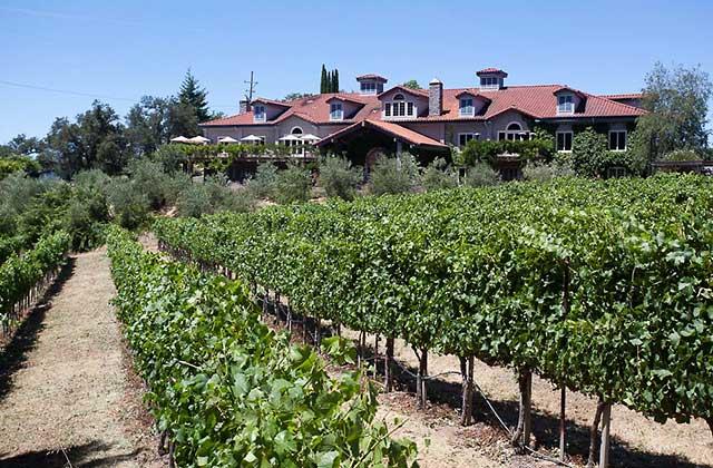 byington vineyards