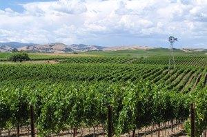 carneros vineyards