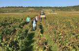 Working Burgundy vineyards