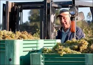 Truchard winery