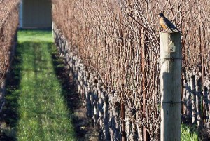December in wine country