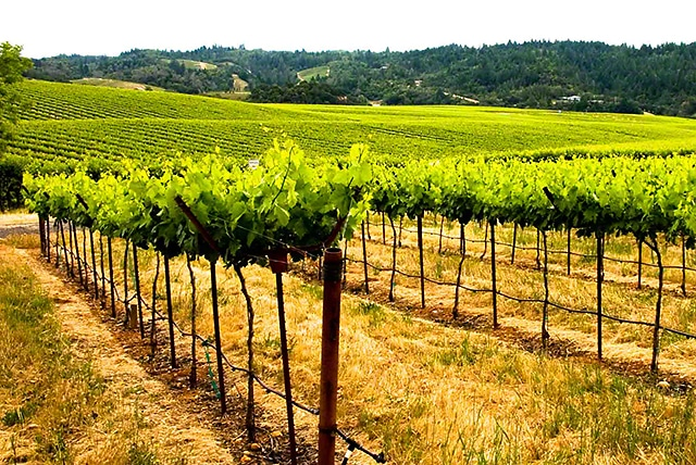 walling road winecountry