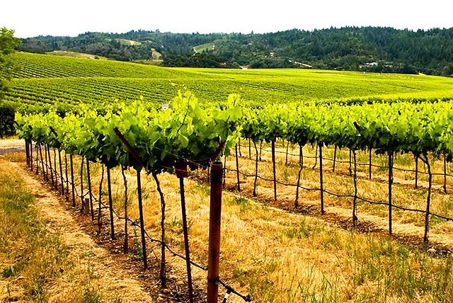 walling road winecountry