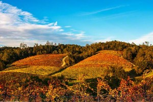 fall colors wine country