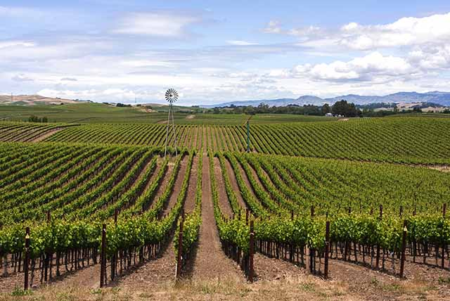 View of Carneros