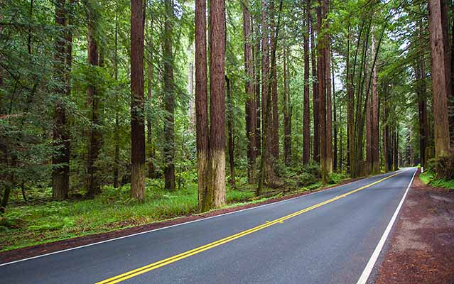 Redwood trees highway 128