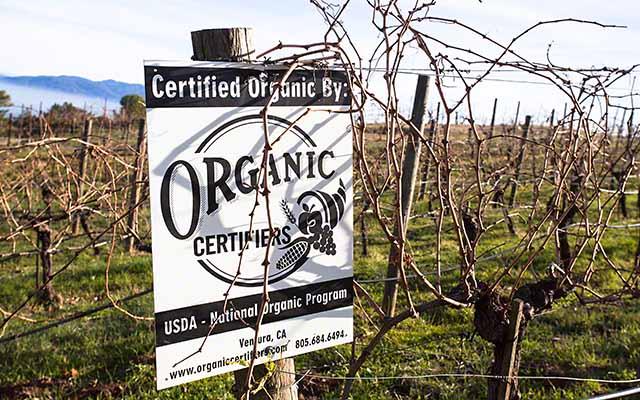 Ridge vineyards Dry farmed and organic vineyards