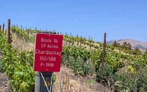 Stolo Chardonnay