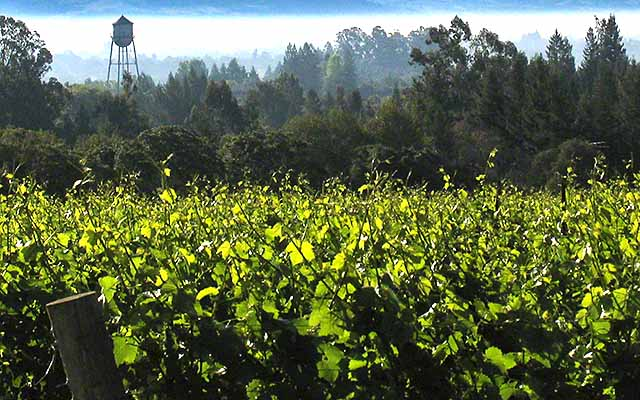 off the beaten path wineries in russian River valley