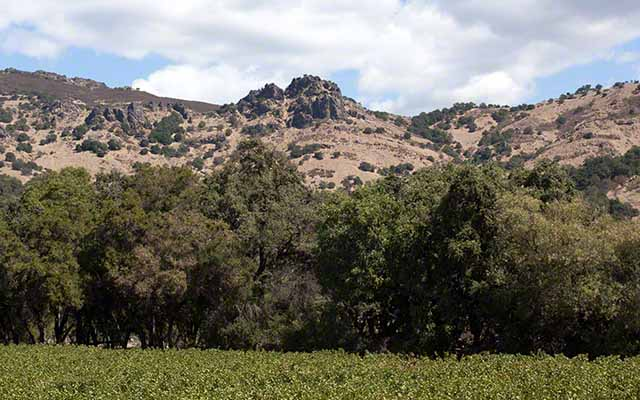 quick and fast trips to the napa valley
