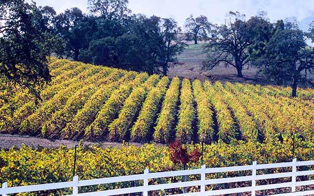 Vineyards Shenandoah Valley