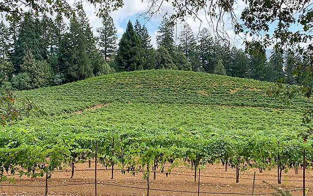 artevino winery in Yorkville Highlands