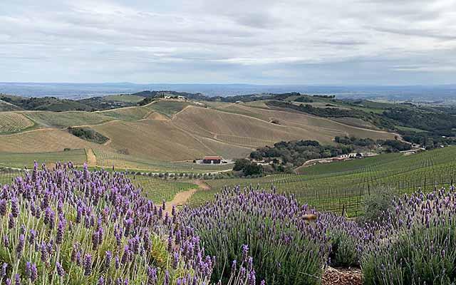 Best wineries on Adelaida wine trail
