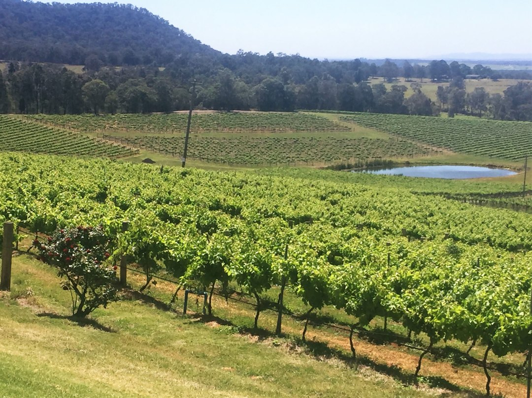Wine Country Tourist Park Hunter Valley