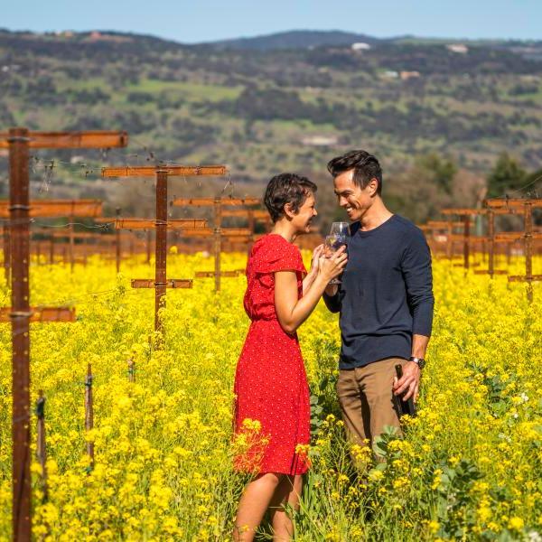 best napa wine tours, napa vineyards, wine tasting in napa