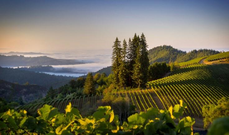 Sonoma Wine Tours, Sonoma Country Wine Tours, Sonoma Valley tours, Sonoma Valley Wine Tours. Napa and Sonoma Wine Tours, Wine Tours Napa Valley And Sonoma