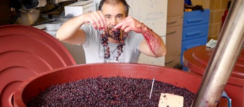 wine-decoded-v16e04-whole-bunch-festa-part-feature-by-paul-kaan