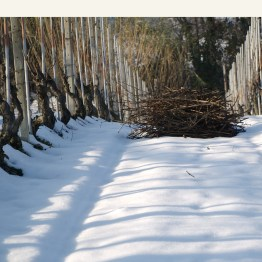 Produttori del Barbaresco Vineyard 3
