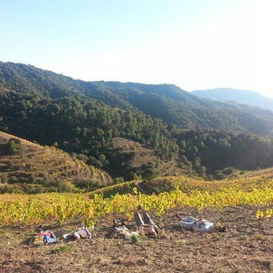 Chilling in the Vineyards of Terroir al Limit