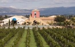 Azienda Agricola COS news5