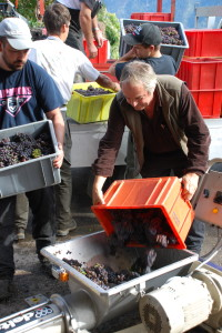 Vintner Nicolas Bagnoud during the pinot gris harvest.