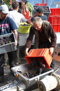 Vintner Nicolas Bagnoud during the pinot gris harvest.