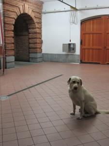 Lino, Elisa's constant companion
