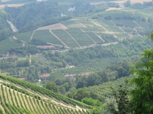 The vineyards of the Barolo appellation stretch for miles across the Langhe's rolling hills.