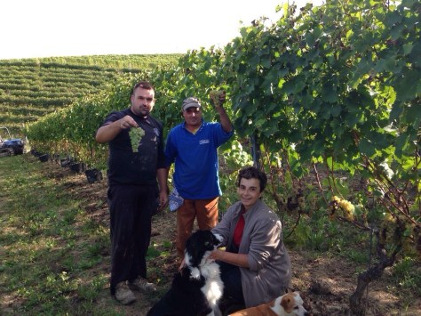 Luciana Grasso and her canine companions Pora (left) and Milo in the Moscato vineyard during vendemmia 2014.