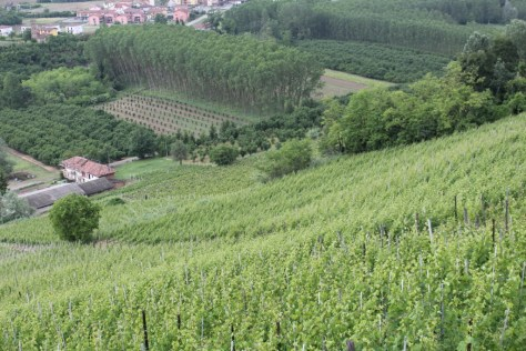 The Cigliuti family's west-facing vineyards on the Bricco di Neive