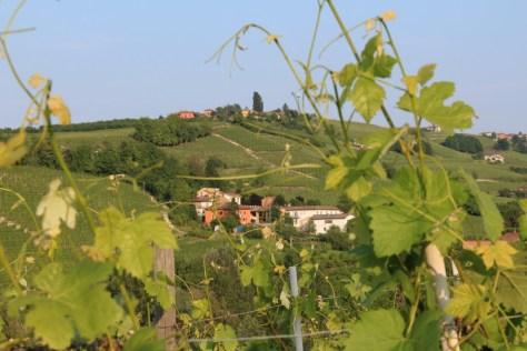 Serraboella vineyard at Cigliuti on Bricco di Neive in Barbaresco denomination.